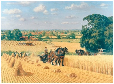 The Harvesting Horses