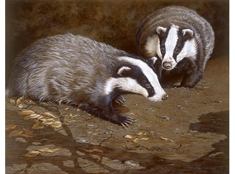 Badgers by Moonlight