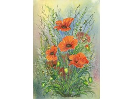 Wayside Poppies